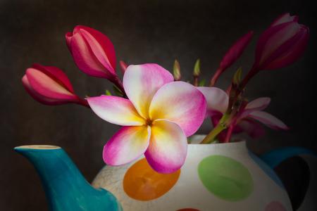 florae: (Still-life) Beautiful flower plumeria or frangipani in fancy baked clay teapot on still life dark background