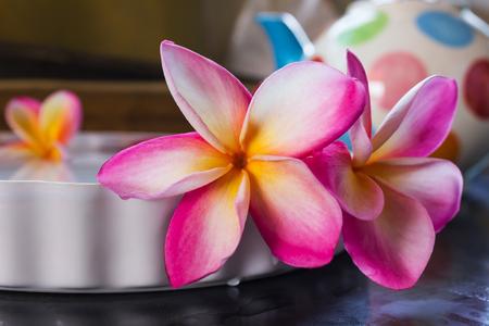 florae: Beautiful pink flower plumeria or frangipani