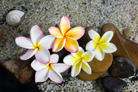 florae: Relaxing and peaceful with flower plumeria or frangipani decorated on water and pebble rock in zen style for spa meditation mood