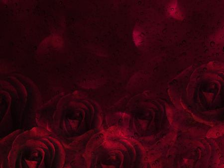 disseminate: Romantic red roses and water drop abstract valentine background