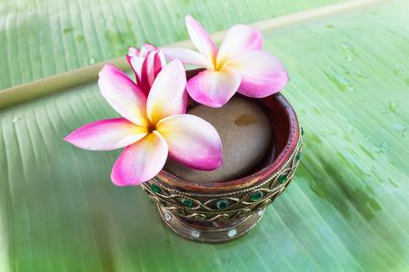 florae: Beutiful pink flowers plumeria or frangipani on green banana leaf Stock Photo