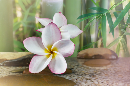 florae: Flower plumeria or frangipani decorated on water and pebble rock with bamboo tree for spa meditation mood