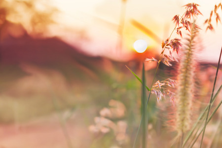 Romantic abstract nature view of grass flower and sunset background in soft mood dreamy sweet pink colour Reklamní fotografie