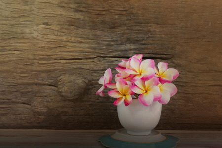 florae: Pink flower frangipani in white cup with wood background in soft sepia antique colour tone and copy space