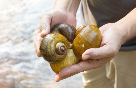 bivalve: Close up man hands presenting big snails from waterfall with water background Stock Photo
