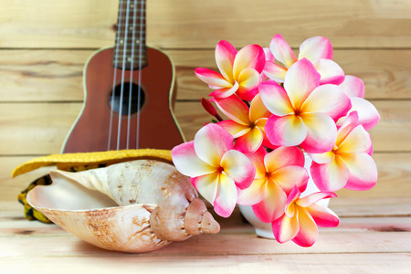 jointed: Beautiful pink flower plumeria or frangipani bunch in white cup with sea conch shell and blurred ukulele on jointed wood background with summer feeling and copy space Stock Photo