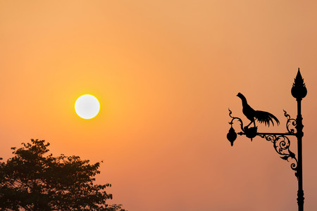 sihlouette: Chicken lamp sihlouette on sunset twilight view and tree bush with copy space Stock Photo