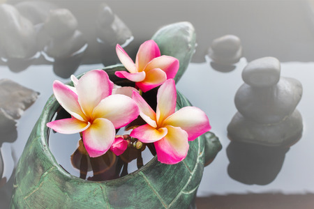 florae: Beautiful flower plumeria or frangipani in turtle rock on water and pebble rock background for spa meditation mood with copy space