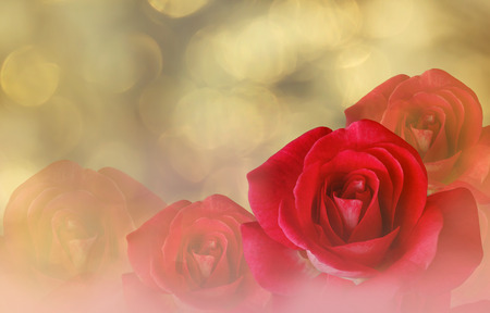 disseminate: Romantic red roses on bokeh abstract valentine background Stock Photo