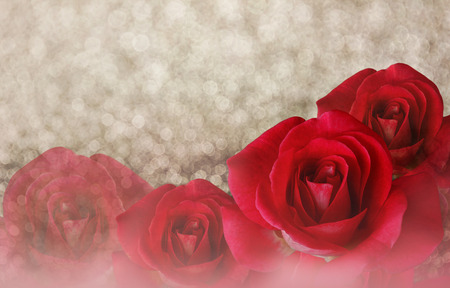 disseminate: Romantic red roses on bokeh abstract valentine dreamy background with copy space Stock Photo