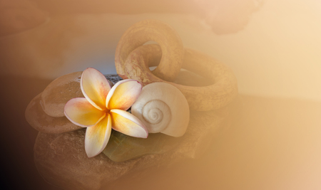 florae: Beautiful flower plumeria or frangipani on water and pebble rock decorated with shell for peace mood