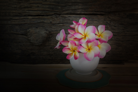 florae: Still-life tone pink flower frangipani in white cup with wood background and copy space