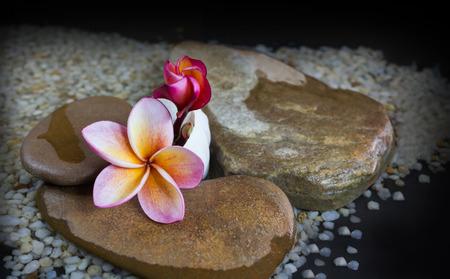 florae: Beautiful pink orange flower plumeria or frangipani on water and pebble rock for spa meditation mood Stock Photo