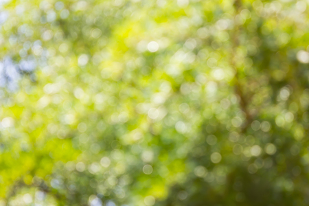 disseminate: Spark and blow bokeh of tree  for romantic soft abstract light nature background