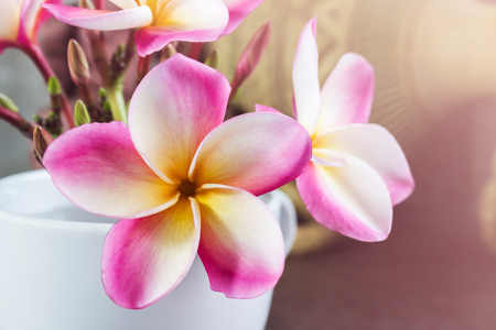 home corner: Beautiful pink yellow frangipani or plumeria flowers in cup at home corner with copy space Stock Photo