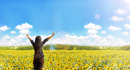 arm bouquet: Rare view of women raise arms embrace sunflowers field with nature and widely blue puffy cloudy sky background Stock Photo