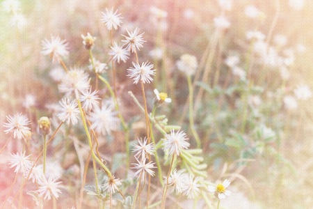 grass flower: Sandstone texture style white and yellow grass flower field in soft mood pink pastel filter for nature romantic picture background Stock Photo