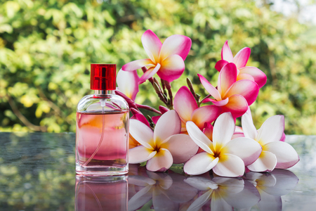eau de perfume: Beautiful bunch of white pink and yellow flower plumeria or frangipani with perfume bottle on nature green tree soft background