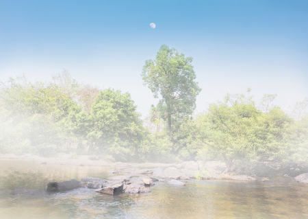 riverside tree: Relax soft nature dreamy view of riverside in fog , rock in stream,tree, sky and moon for background Stock Photo