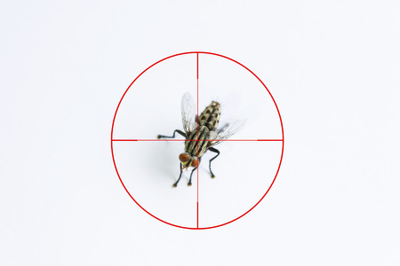 eradicate: Fly or housefly and red target sign for elimination concept, Fly or housefly on white background, illness or germ carrier animal