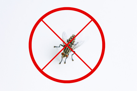 eradicate: Fly or housefly and red stop sign for beware concept, Fly or housefly on white background, illness or germ carrier animal and stop sign