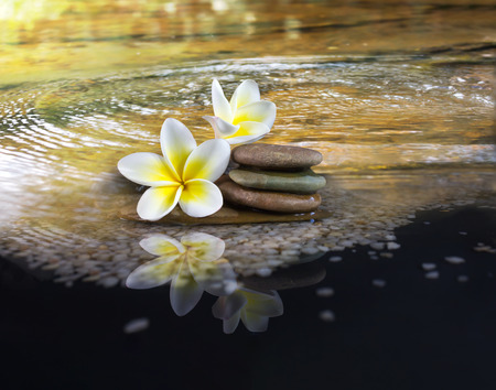 florae: White and yellow fragrant flower plumeria or frangipani on crystalline water and pebble rock for spa meditation mood, plumeria or frangipani on peace nature, plumeria or frangipani on transparent water surface