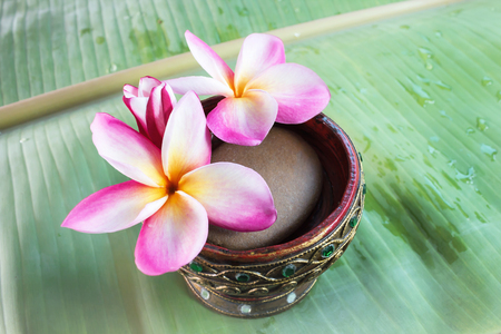florae: Beutiful pink white and yellow flowers plumeria or frangipani on green banana leaf, fresh sweet flowers plumeria or frangipani and water drop for background with blank area and dreamy mood