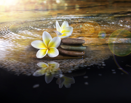 crystalline lens: White and yellow fragrant flower plumeria or frangipani on crystalline water and pebble rock for spa meditation mood, plumeria or frangipani on peace nature with lens flare and sunlight, plumeria or frangipani on transparent water surface