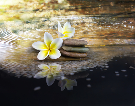 florae: White and yellow fragrant flower plumeria or frangipani on crystalline water and pebble rock for spa meditation mood, plumeria or frangipani on peace nature with bokeh and sunlight, plumeria or frangipani on transparent water surface