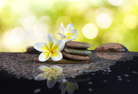 florae: White and yellow fragrant flower plumeria or frangipani on water and pebble rock for spa meditation mood, plumeria or frangipani on nature green bokeh and soft light background