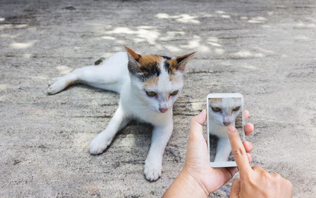 Hands with finger press or touch  on smart phone screen or mobile phone shooting photo white cat on cement floor, hand recording video or take a photo white cat via smartphone