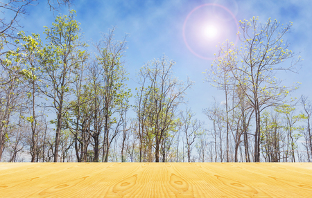 jointed: Blank area or space table top on tree and sunny sky nature background