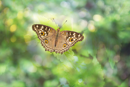 Brown and cream with orange colour buterfly on dreamy bokeh for romantic soft nature background with copy space