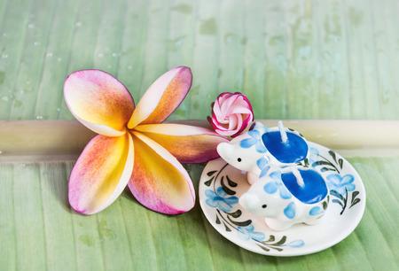 florae: Flower plumeria or frangipani on green banana leaf with aroma candle