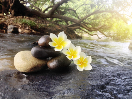 florae: Flower plumeria or frangipani with pebble on big stone rock in waterfall ,flowers in spa meditation and romantic feeling background Stock Photo