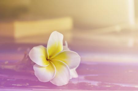 fleur unique plumeria ou frangipane dans le ton de couleur cru