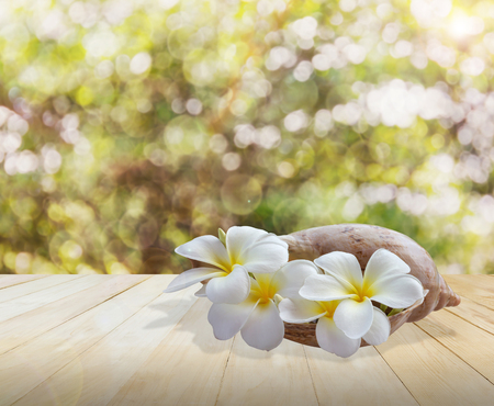 Frangipani or plumeria flower in sea conch shell on jointed wood table with nature green bokeh tree background in summer sunlight and lens flare