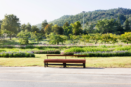 View of colourful nature park, empty wooden bench in the flower field and mountain background