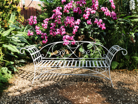 White line steel vintage style bench in garden with beautiful white violet purple pink orchid flower tree background Standard-Bild