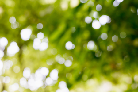 Dreamy soft bokeh of tree bush background, green and white sunlight trough tree bush for nature background Standard-Bild