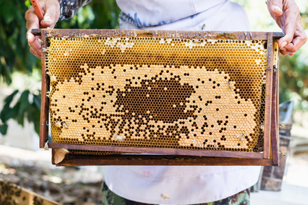 Bee hive or bee nest with farmer hand, harvest the honey beein farm