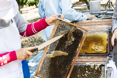 Bee hive cutting for honney harvest by knife with farmer background