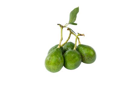 Fresh avocado group   on white background