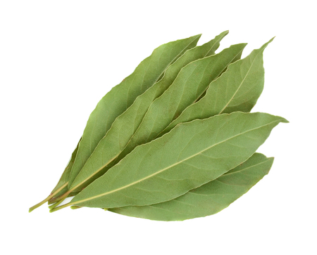 Fresh bay leaves isolated on white background
