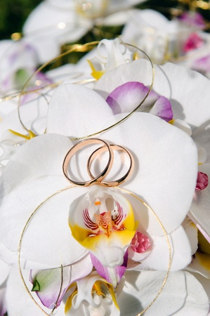wedding vows: Orchid with gold wedding bands Stock Photo