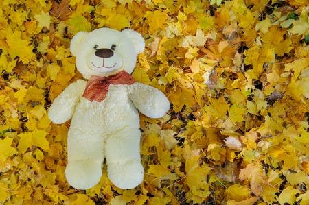 Teddy bear sitting in a autumn leaves Zdjęcie Seryjne