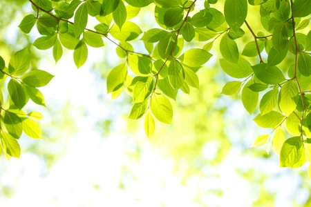 early summer: The fresh green