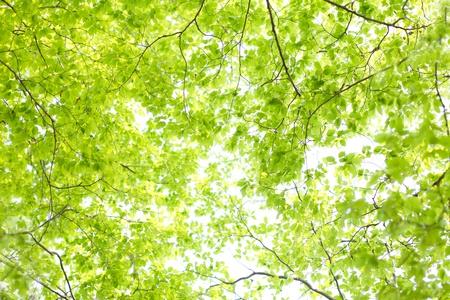De verse groene Stockfoto