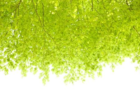 rui: The fresh green
