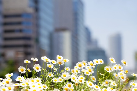 flower bed: urban environment
